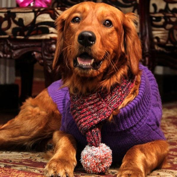 Doggo Clothing