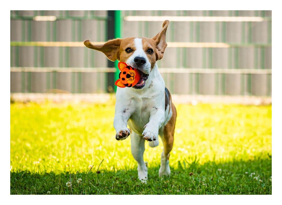 Doggo Run