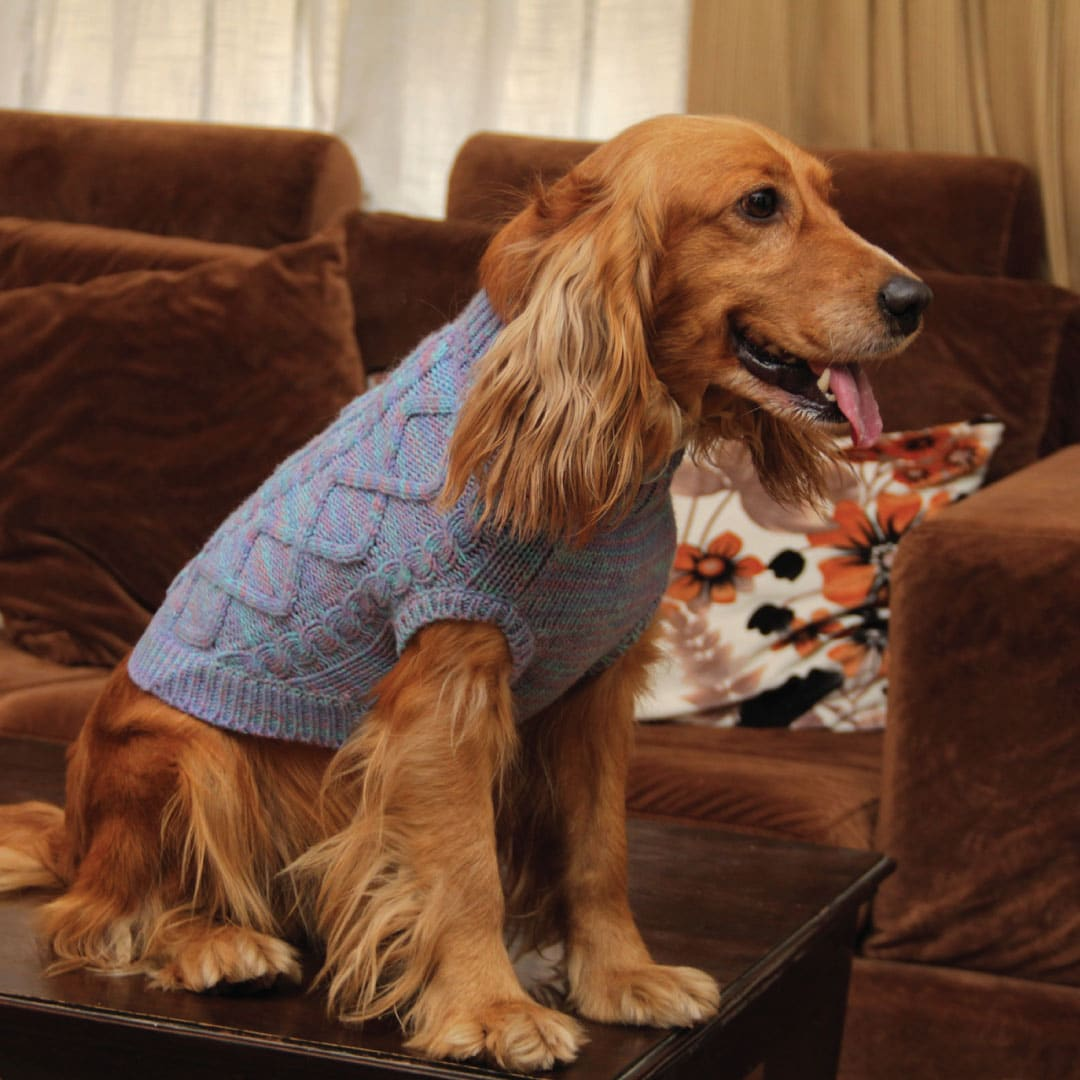 The Need for Dog Sweaters