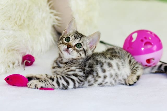Benefits of Cat Toys